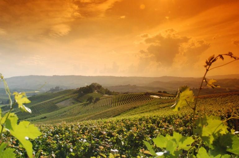 I vitigni autoctoni e gli internazionali